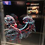 Photo de Bodies The Exhibition