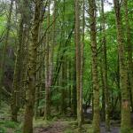 Foto di Torc Waterfall