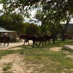 Photo de Dixie Dude Ranch