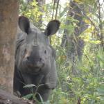 Rhino seen on safari