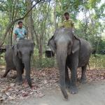 Elephant meet and greet