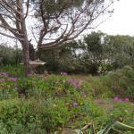 Photo of Il Giardino Di Sabbia
