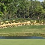 Beautiful views of Innisbrook