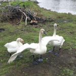 Pine Grove Campground and Waterfowl Park Foto