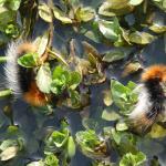 Jackson-Frazier Wetlands