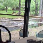 Outdoor Mountain Stream Dining