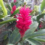 de très belles fleurs