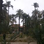 Foto de Jardín Milenio