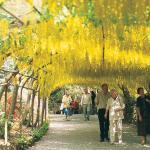 Visit our National Trust Gardens at Bodnant