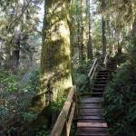 Rainforest Trail Foto