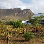 Vineyard Country House Foto