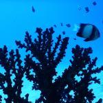 Korallenwelten