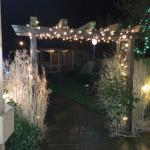 Garden is all lit up at night