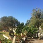 Landscape - The Siena Village Munnar Photo