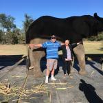 Adventures with Elephants Foto