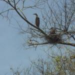 un oiseau parmi beaucoup que l on a pu apercevoir