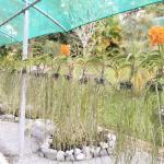 Photo de Sarawak Orchid Garden