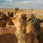 Photo of Marruecos Puesta de Sol Day Tours