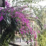Foto di Orchid Retreat