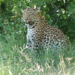 Photo de Wilderness Safaris Savuti Camp