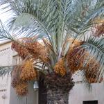 Ksar El Kabbaba Foto