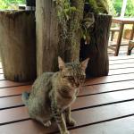 Bann Makok The Getaway Foto
