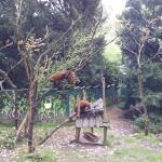 Naturschutz Tierpark Görlitz