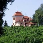 View on vineyards.