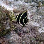 Ramon Zapata Divers Foto