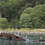 Tasman Island Adventure Cruise