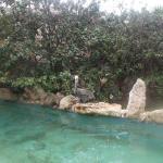 el pelicano solitario