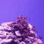Photo de L' Aquarium
