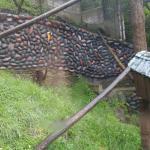 Foto de Zoologico de San Martin