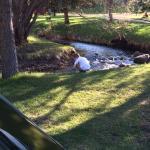 Photo de Crooked Creek Resort and RV Park