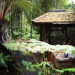 Photo de Volcano Rainforest Retreat