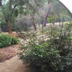 Foto de Jardín Botánico de Johannesburg y Represa Emmarentia