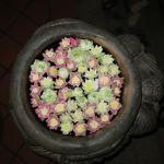 Lotusblüten im Empfangsbereich