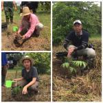 Reforesty Program