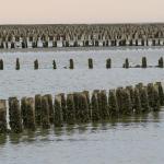Typisk syn på Mandø - pæle i tusindtal