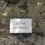 Photo de L'Olivier Millénaire