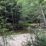 Bild från Ripplewood Resort