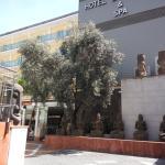 Foto de Hotel La Palmera