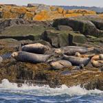 Sea families on Egg Island