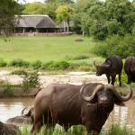 Photo de Inyati Game Lodge