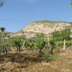 Photo of La Suite di Segesta