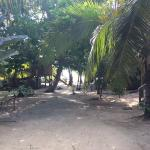 After you walk through a small grove, this is the view to the bungalows. It's not next to the ro