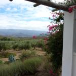 View from the cottage/suite (olive grove and lavandel)