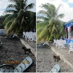 Antours Dominica Foto