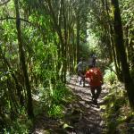 Foto de Pasochoa Forest Reserve