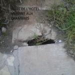 ALLEE ET JARDIN DE L HOTEL